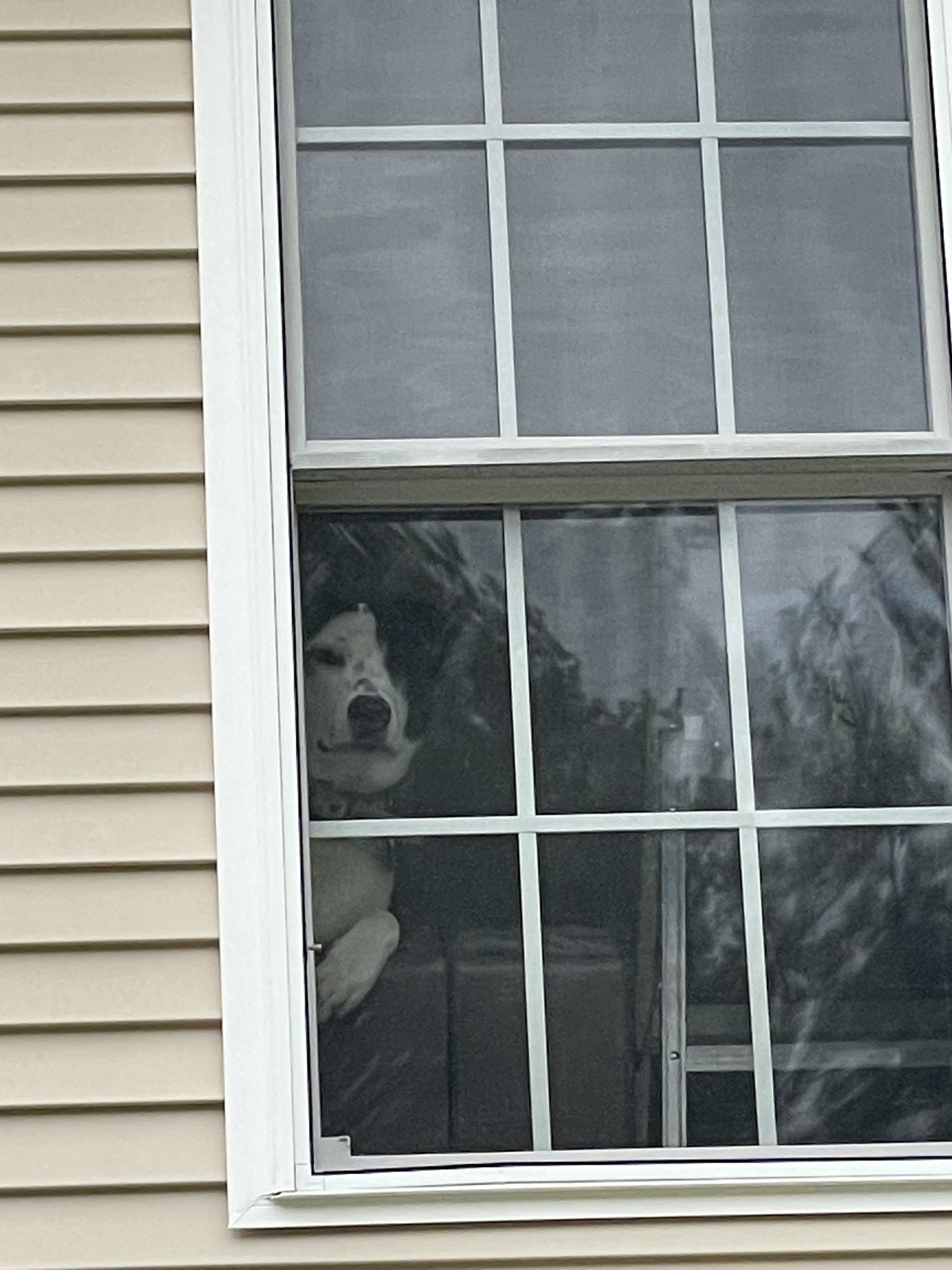 Zoomed in on window to see a dog leaning over a sofa to watch the action outside